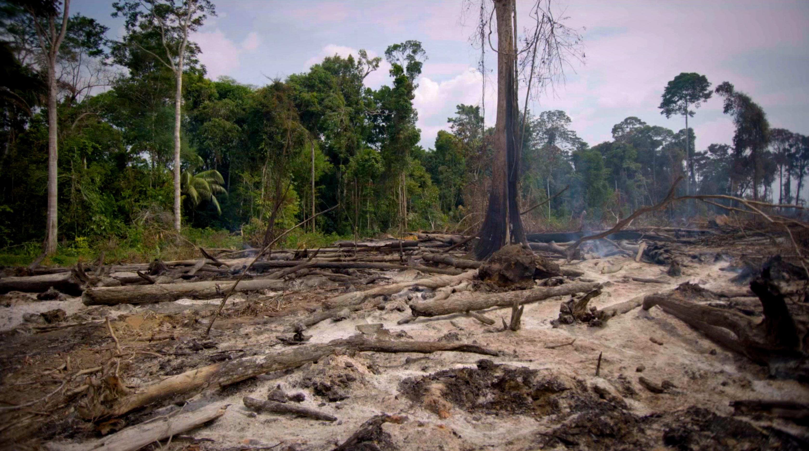 Afbeelding van Desastre na floresta tropical