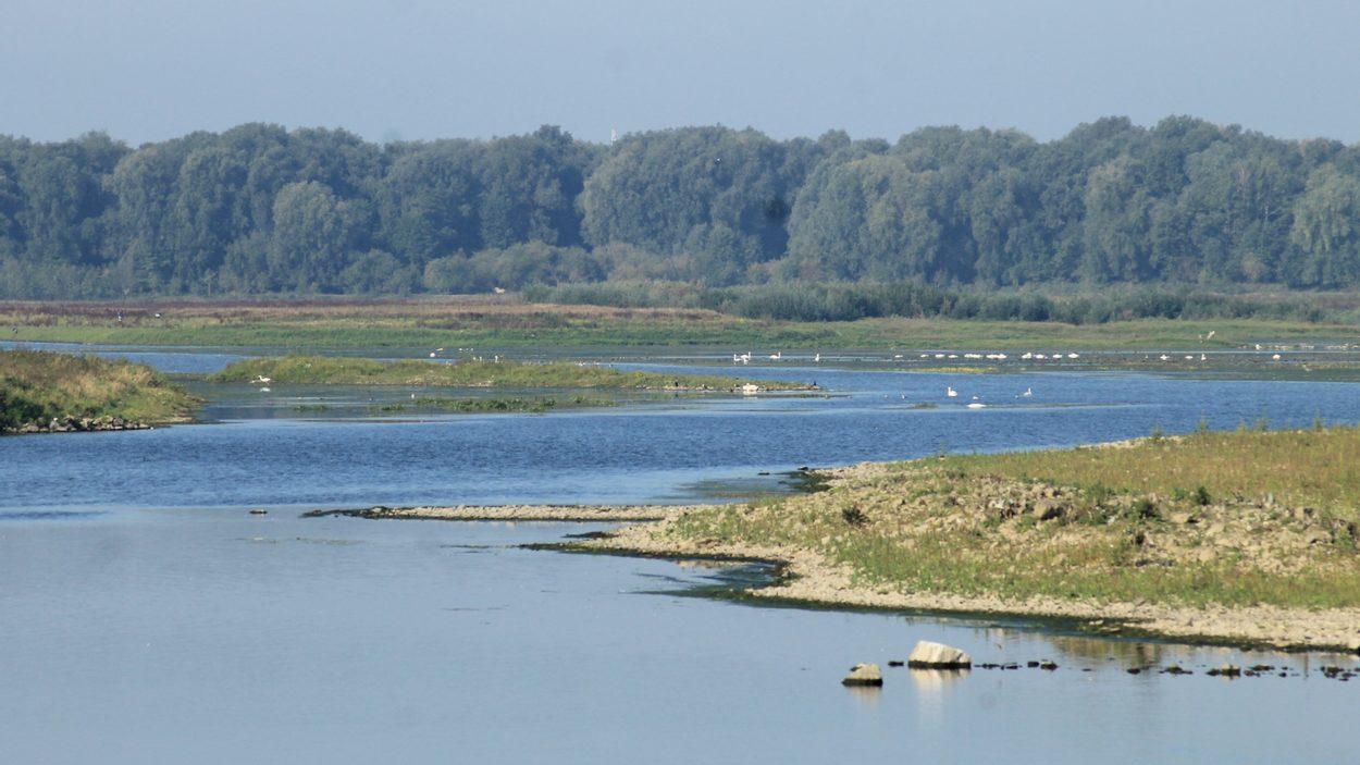 Afbeelding van Zwemmende zaag, Maastricht, Duizend eilanden, etc