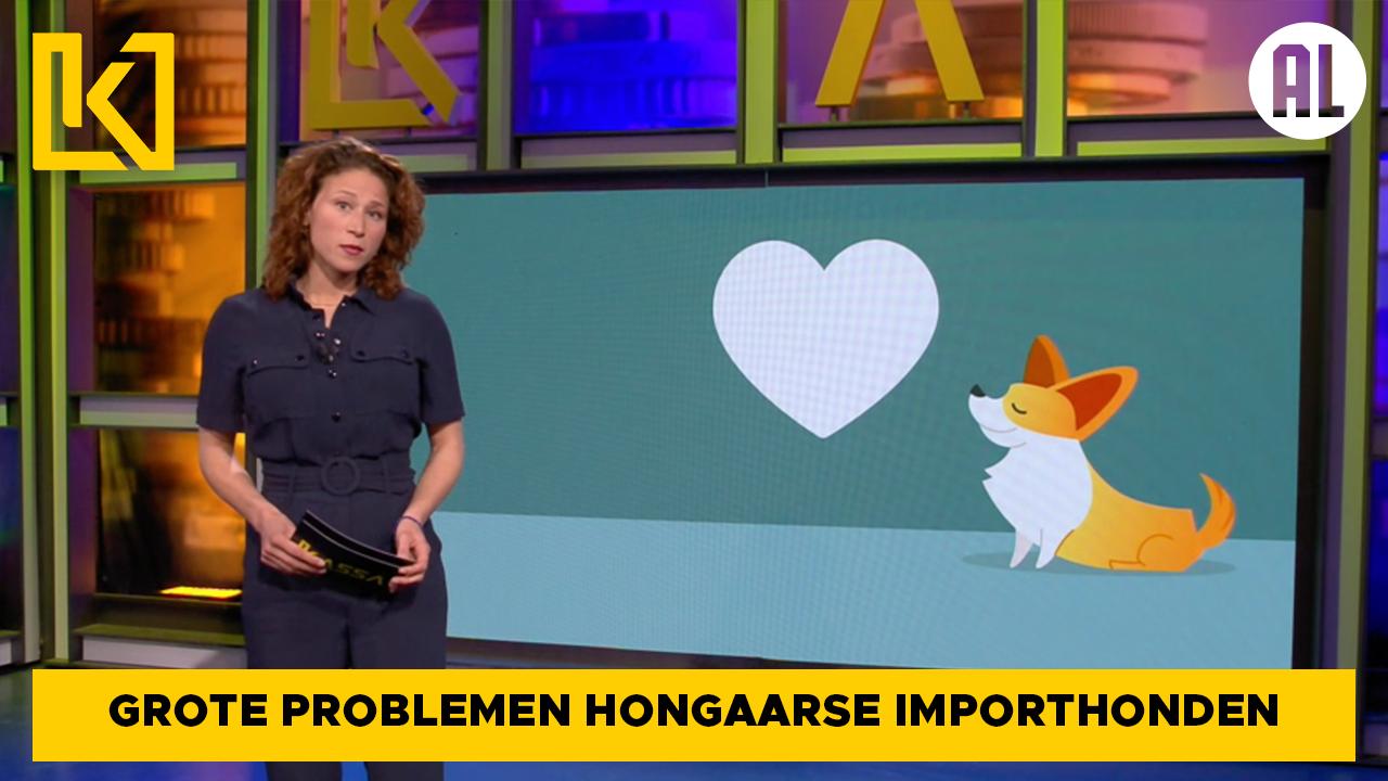 Afbeelding van Grote problemen Hongaarse importhonden met gezondheid, gedrag en vaccinatie tegen hondsdolheid
