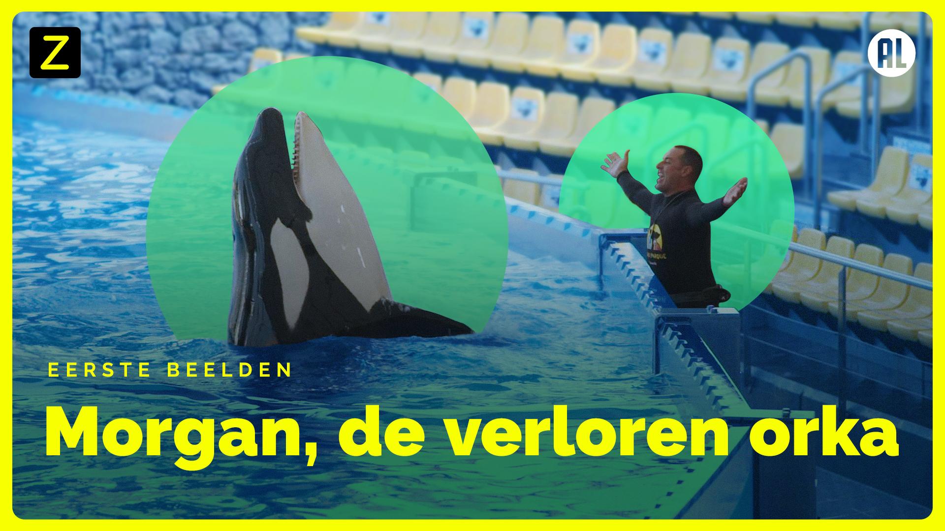 Morgan, de verloren orka - eerste beelden